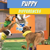 Puppy Differences