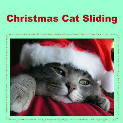 Christmas Cat Sliding