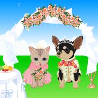 애완 동물 웨딩 드레스