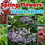 Spring Flowers Hidden Objects